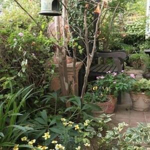 秋の庭作業~高齢者のガーデニングへの臨み方