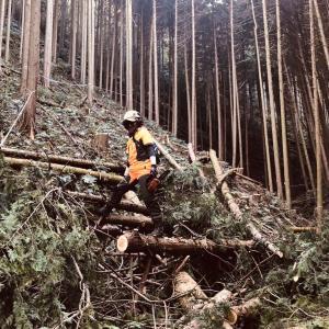 宇治田原で山林伐採