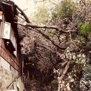 京都市伐採・左京区伐採・台風災害事例・お山の樹がお家に倒木・mayugarden