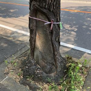 兵庫県伐採・三木市伐採・伐採の見積下見・mayugarden