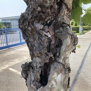 兵庫県伐採・三木市伐採・伐採樹木調査・mayugarden.com・現地見積無料・まずはお電話を