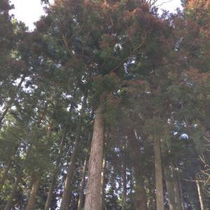 兵庫県・丹波篠山市伐採・杉ヒノキの山林・現地見積無料・格安・mayugarden