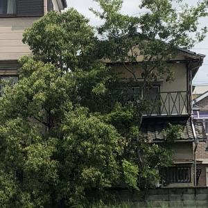 京都・城陽市庭木伐採・台風強風対策・格安・mayugarden