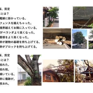 京都・八幡市の庭木・植木・高木の伐採・剪定はマユガーデンにお任せ下さい・自社施工100%・格安