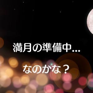 満月の準備中...なのかな?