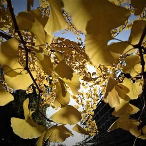 福島・被災地【11月10日の活動報告】色鮮やかな落葉の絨毯と空しく消えた原発事故の記録