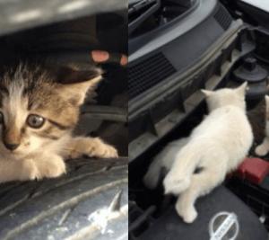 """◆拡散希望◆ 寒くなるこれからの季節は、お外で暮らす猫さんを守るために """"猫バンバン""""を忘れずに"""