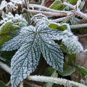 【12月1日の活動報告】とうとう氷点下に…寒さに命を奪われる前に、保護し抱きしめて暖めてあげたい