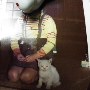 罪な程に可愛いから やっぱり ずっと 猫さまが好き