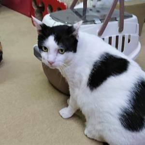 続【朗報 (その2)】「豆太郎くん」、身も心も幸せがいっばい詰まった猫さんになれましたぁ~♪♪