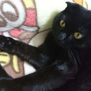 【保護っ子情報】多くの命を奪った濁流に呑みこまれず奇跡的に助かった強運な黒猫さんの「アキちゃん」