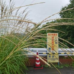 【9月13日の活動報告】秋を感じるようになった福島・被災地で、出逢った動植物に喜怒哀楽