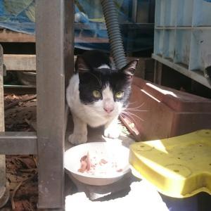 【幸せ通信】猫さまは、幸せと愛情でこんなにも変わる…「もち丸くん」7歳のお誕生日おめでと~う♪