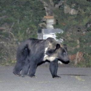 ◆拡散希望◆【ご協力のお願い】人里に出没する「熊さん」を殺させないために私達に出来る事は、何か?