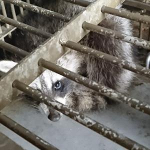 復興って、殺すことなの? ~原発事故で無人となった町で生きる権利を奪われている動物たち~