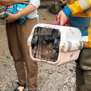 「中に猫がいる」警視庁救助隊員の機転で助かる