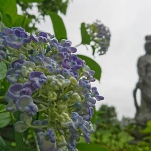 ~故郷の紫陽花➋~ 福島原発事故から11年目の福島・被災地