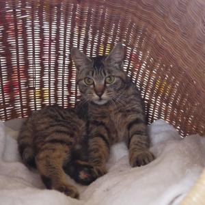 猫神さまがくれたプレゼント ~氷点下の中で震えていた子猫の「みぃちゃん」の軌跡~