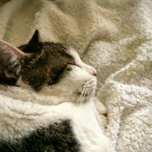 可愛い寝顔の「小梅さん」