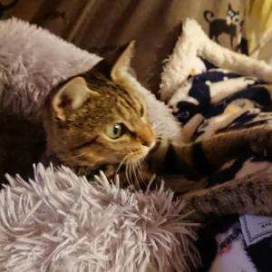 【保護っ子情報】成猫なのに生後6ヶ月の体重しかなかった「ややちゃん」の、お嫁入り準備整いました♪