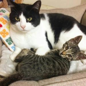 「人」と「猫さま」が、幸せになれる条件の1つ