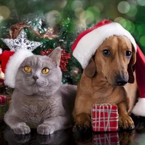 ★拡散★【ご注意ください】クリスマスからお正月にかけて大切な「猫さんの命」が〈危険〉に晒さる!!