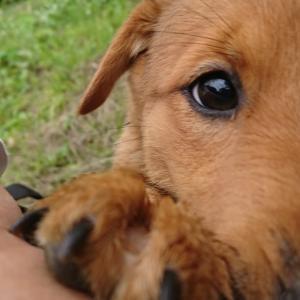 ★拡散希望★【里親さま募集】被災地を彷徨っていた母犬が命がけで産んだ、姉妹犬「まつ」&「ふじ」