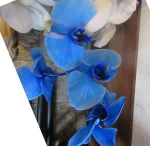 水色の胡蝶蘭他2種の植え替え DOLCEのケーキ2種