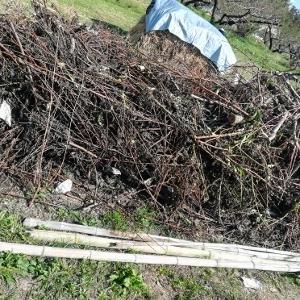 秋季剪定枝の処理