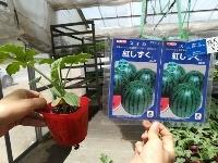 夏野菜の植付第2弾!