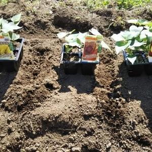 お庭でお野菜プロジェクト始動♪