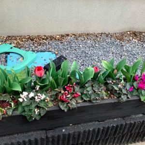 146))家庭菜園をこの春本格的に開始してみました!
