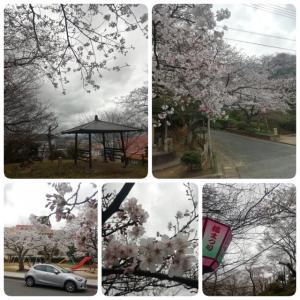 島根で神社&桜ドライブ2・神の国で神社めぐり