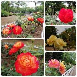 香川ドライブ・季節の花と果物を求めて<前編>