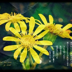 ・・* 写真詩 vol. 28   &   vol. 29 *・・      Recent reports (後半) * 孫によせて *