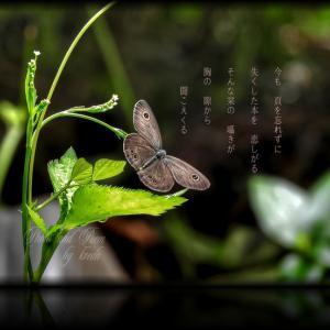 ・・* 写真詩 vol. 30 *・・
