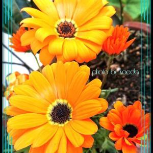 花を見ながら珈琲タイム