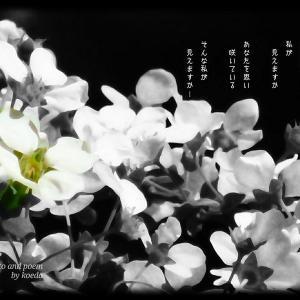 ・・* 写真詩 vol. 27 *・・
