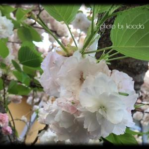 *私の小さな春*Part 2