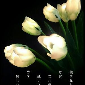 ・・* 写真詩 vol. 13 *・・