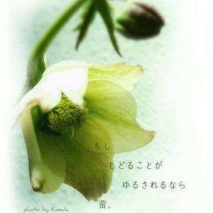 ・・* 写真詩 vol. 12 *・・
