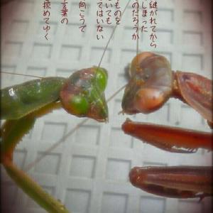 ・・* 写真詩 vol. 3 *・・