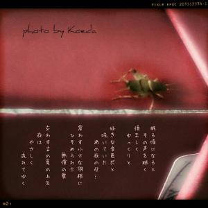 ・・* 写真詩 vol. 6 *・・