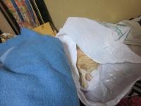 ゴミ袋に寝るねこ