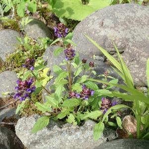 市内で撮影した植物
