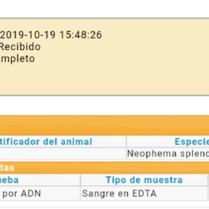 DNA性別鑑定 スペインは、、