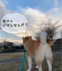 虹の橋をみたよ