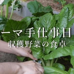 収穫野菜の食卓