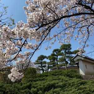 お散歩で春を見つける