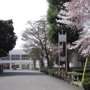 そこに立つ 桜の木